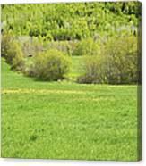 Spring Farm Landscape In Maine Canvas Print