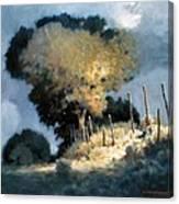 Sun Garden Canvas Print