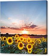 Sunflower Summer Sunset Landscape With Blue Skies Canvas Print