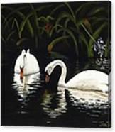 Swans II Canvas Print