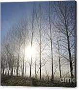Trees On A Foggy Field Canvas Print