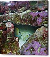 Tropical Fish In Cave Canvas Print