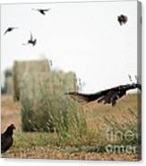 Turkey Vultures Canvas Print