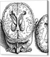 Vesalius: Brain, 1543 Canvas Print