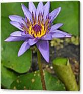 Water Lily  9 Canvas Print