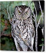 Whiskered Screech Owl Canvas Print