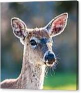 White Tail Deer Bambi In The Wild Canvas Print