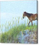 Wild Horse On The Outer Banks Canvas Print