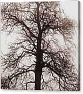 Winter Tree In Fog Canvas Print