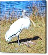Woodstork Canvas Print