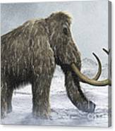Woolly Mammoth Canvas Print