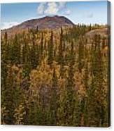 Yukon Gold - Fall In Yukon Territory Canada Canvas Print
