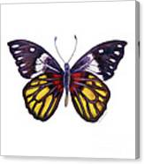31 Delias Henningia Butterfly Canvas Print