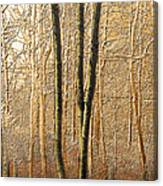 3150 Canvas Print