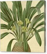 Botanical Print Or English Natural History Illustration Canvas Print