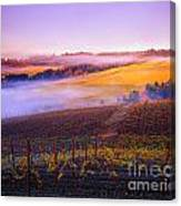 In A Vineyard Canvas Print