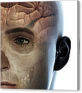Human Brain Canvas Print