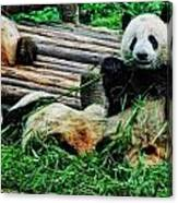 3722-panda -  Acanthus Sl Canvas Print
