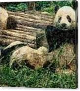 3722-panda -  Colored Photo 2 Canvas Print