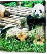 3722-panda -  Oil Stain Sl Canvas Print