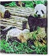 3722-panda -  Watercolor 2 Sl Canvas Print