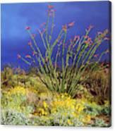Usa, California, Anza-borrego Desert Canvas Print