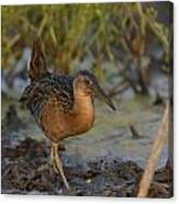 King Rail In A Wetland Canvas Print