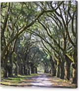 Allee Of Oaks Road Canvas Print