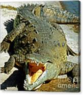 American Crocodile Canvas Print