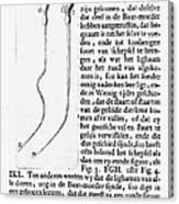 Anton Van Leeuwenhoek Canvas Print