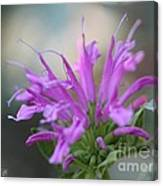 Bee Balm From The Panorama Mix Canvas Print