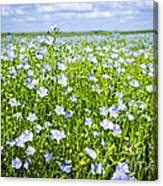 Blooming Flax Field Canvas Print