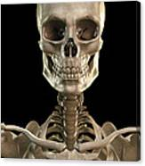 Bones Of The Head And Upper Thorax Canvas Print