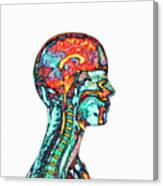 Brain And Spinal Cord Canvas Print
