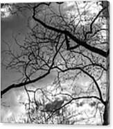 Branches And Clouds Canvas Print