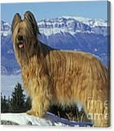 Briard Dog Canvas Print