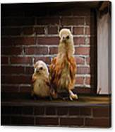 4. Brick Chicks Canvas Print