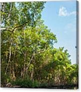 Caroni Swamp Canvas Print