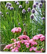 Chives In Bloom Canvas Print