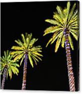 4 Christmas Palms Canvas Print