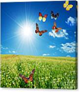 Colorful Buttefly Spring Field Canvas Print