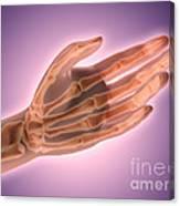 Conceptual Image Of Bones In Human Hand Canvas Print