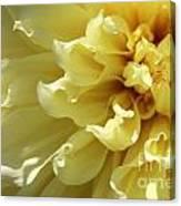 Dahlia Named Kelvin Floodlight Canvas Print