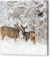 Doe Mule Deer In Snow Canvas Print