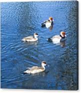 4 Duck Pond Canvas Print