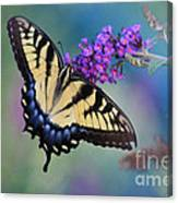 Eastern Tiger Swallowtail Butterfly On Butterfly Bush Canvas Print