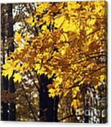 Fall Yellow Canvas Print