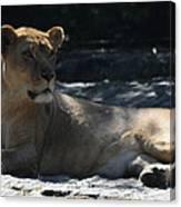 Female Lion Canvas Print