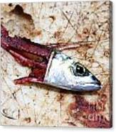 Fish Bait Canvas Print