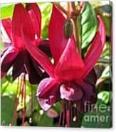 Fuchsia Named Roesse Blacky Canvas Print